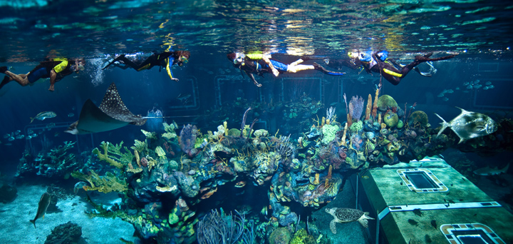 Epcot� Sea Aqua Tour